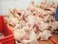 1.6 tons of spoiled poultry seized in Cairo